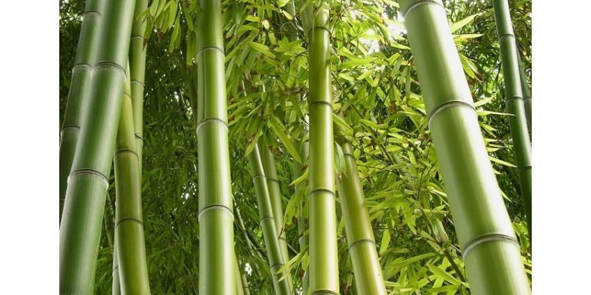 Пряжа из бамбука